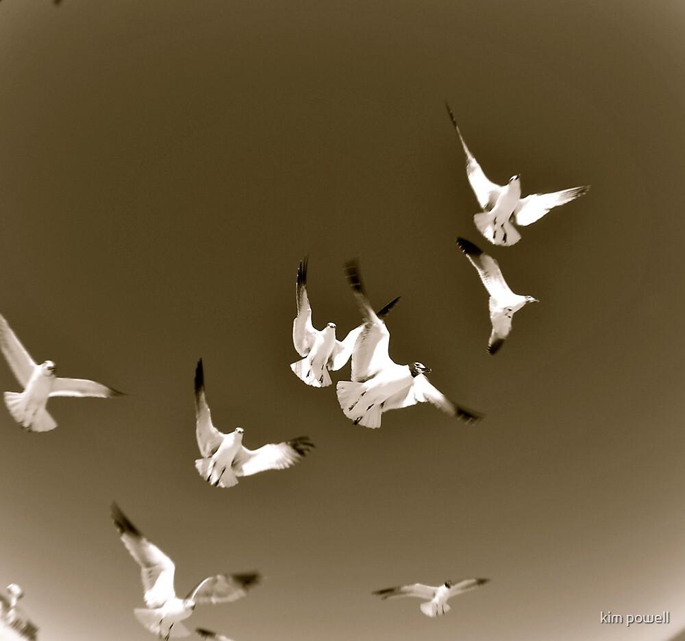 Seagulls by kim powell