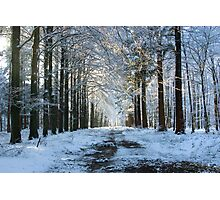 Lane through snowy woods  Photographic Print