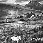 White Horse by Jim Kernan