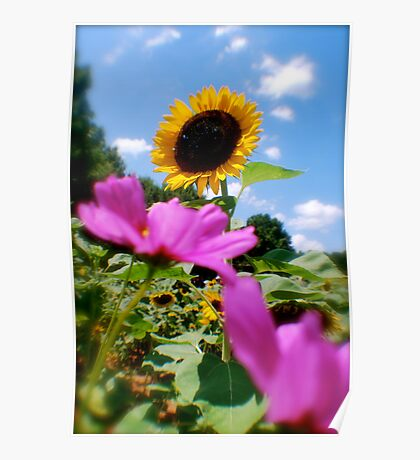 Sunflower in the Cosmos Poster
