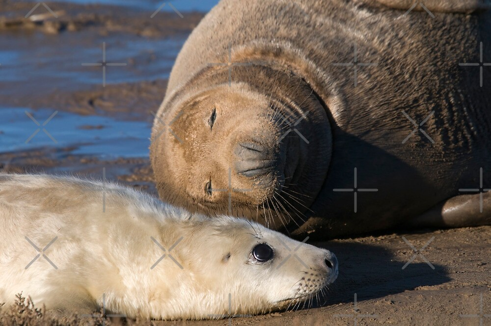 I'm NOT a Pillow Mom... by Robert Taylor