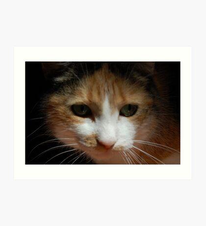 fina the creeper cat Art Print