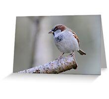 Sparrow, The Rower, County Kilkenny, Ireland Greeting Card