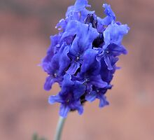 lavendar by Floralynne
