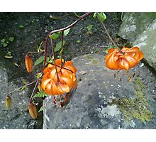 The Wilted Rock Flower - N900 Photographic Print