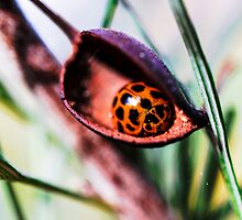 Ladybug #2 of 3 by JoBling