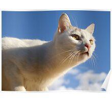 Gato blanco Poster