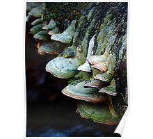 Where faeries live - mushrooms on a log Poster