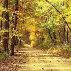 Rural Dirt Road in Madison county, Arkansas by David  Hughes