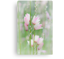 Soft Flowers Canvas Print