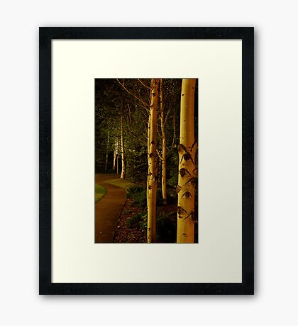 night aspens.  snowmass, colorado Framed Print
