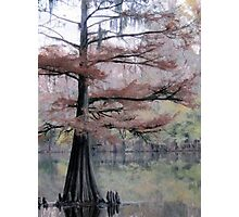 Autumn Cypress Photographic Print