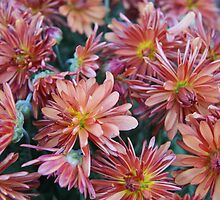 just peachy mums by rue2