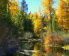 """Nature's Beauty"" by Lynn Bawden"