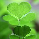happy saint patrick's day!♣!♣!♣!♣!♣! by Iris Mackenzie