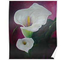 Arum Lilies 2 Poster