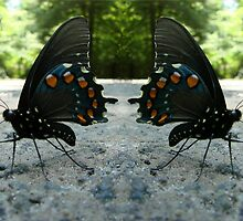 Pipevine Swallowtail Butterflies by Jean Gregory  Evans
