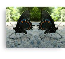 Pipevine Swallowtail Butterflies Canvas Print