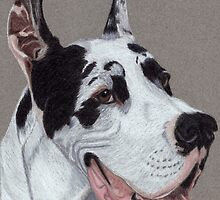 Harlequin Great Dane Vignette by Anita Meistrell Putman