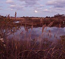 The Moon Peeks Out Over the Succotash Salt Marsh by Jack McCabe