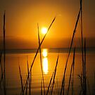 Florida golden sunset by jozi1
