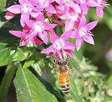 Hovering bee! by jozi1