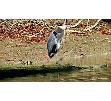 Crane 1 Photographic Print