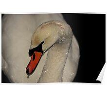 Swan Series 5 Poster