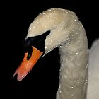 Swan Series 6. by Stan Owen