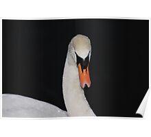 Swan Series 7. Poster