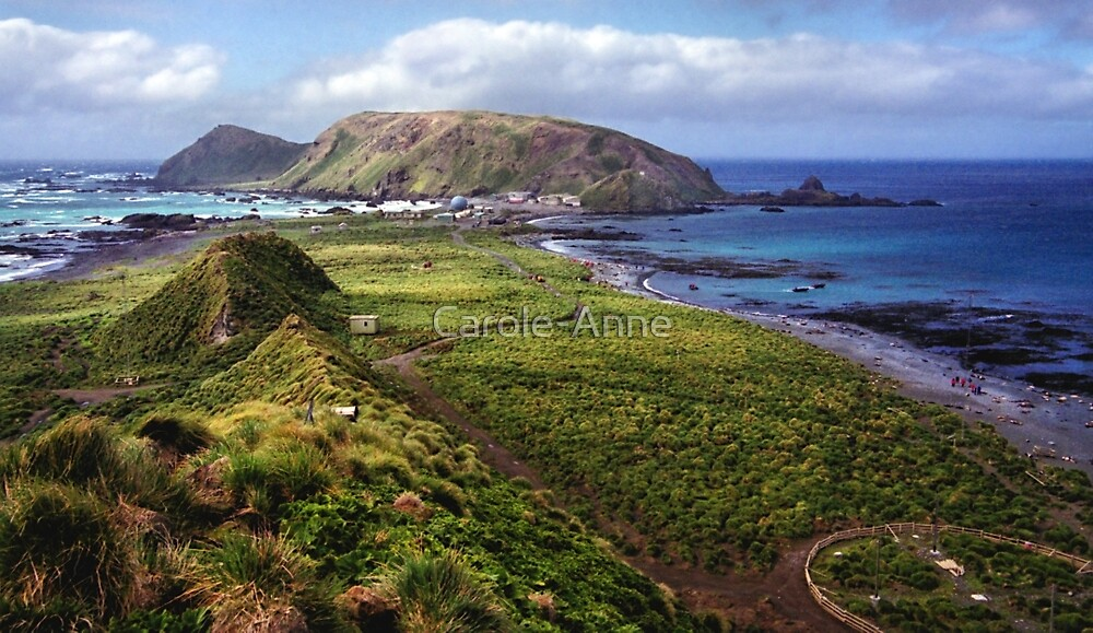 Summer at Macquarie Island & the Research Station by Carole-Anne