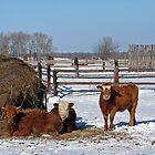 On The Prairie Farm by Teresa Zieba