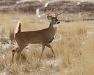 flagging buck#190 by Rodney55