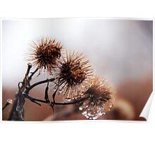 Autumn Weeds Poster