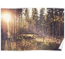 Dreamy forest Poster