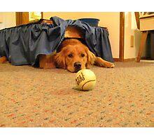 .......ball.......ball, my ball! Photographic Print