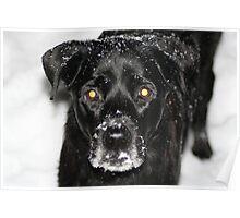 It's Snowvember! Poster
