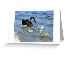 Black Mother Swan and her 5 cygnets Greeting Card