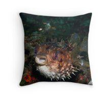 orbicular burrfish - cyclichthys orbicularis Throw Pillow