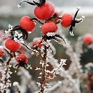 Frost on Rosehips by Christopher Cullen