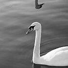 The Swan by StamatisGR