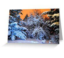 My Snowy Backyard in HDR Greeting Card