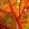 Natural Macro Textures in Orange