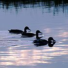 Mallard Ducks at Dusk by Rod Johnson
