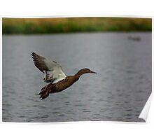 Waterfowl in Flight #3 Poster