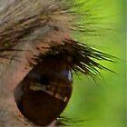 Bright Eye by John Thurgood
