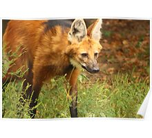 Stalking Wolf Poster