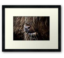 Hamish, Highland Cow, Kilmahog Framed Print