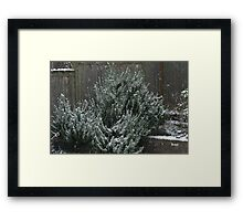 Rosemary for Rememberance Framed Print