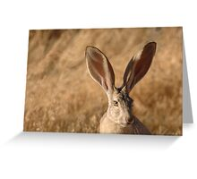 Beautiful Jackrabbit Greeting Card